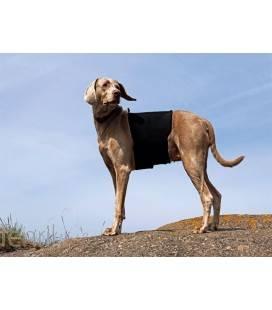 Ceinture lombaire pour chien