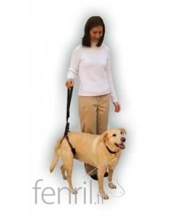 Harnais Pour L 233 Vrier Manmat Merhi Pour Greyhound Whippet