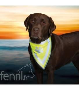 Bandana fluo pour chien Safer Life