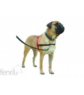 Harnais Halti pour chien