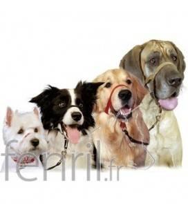 Collier Halti pour chien