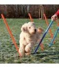 Slalom agility pour chien
