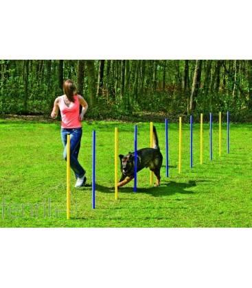 Slalom agility chien