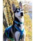 Inlandsis Névé - collier pour chien