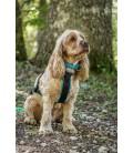 Inlandsis Névé SC - collier pour chien