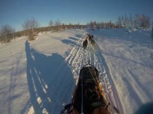 amundsen race