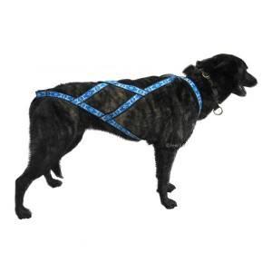 harnais pour chien traction