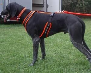 harnais pour chien rando traction