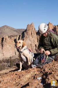 harnais pour chien suspension