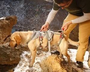 harnais pour chien reeducation