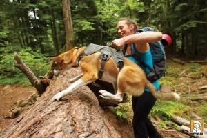 harnais pour chien randonnee poignee