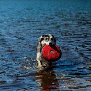 chien frisbee coup de chaleur
